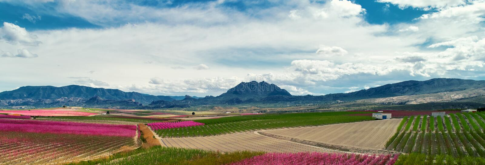 Cropped image horizontal view orchards in bloom. Spain royalty free stock photos