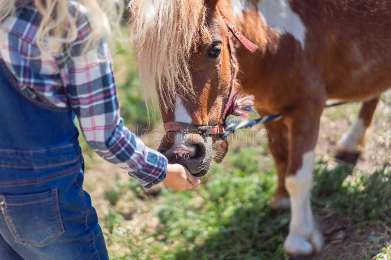 cropped image of kid feeding cute pony royalty free stock images