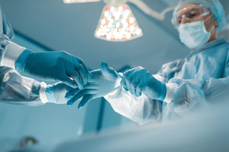 cropped image of nurse helping surgeon wear royalty free stock photography