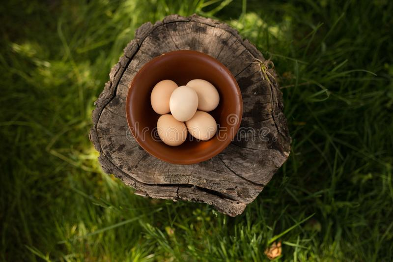 Cropped image of raw farm chicken eggs arranged in a plate on a wooden trunk. Horizontal image. bio food concept. royalty free stock photos