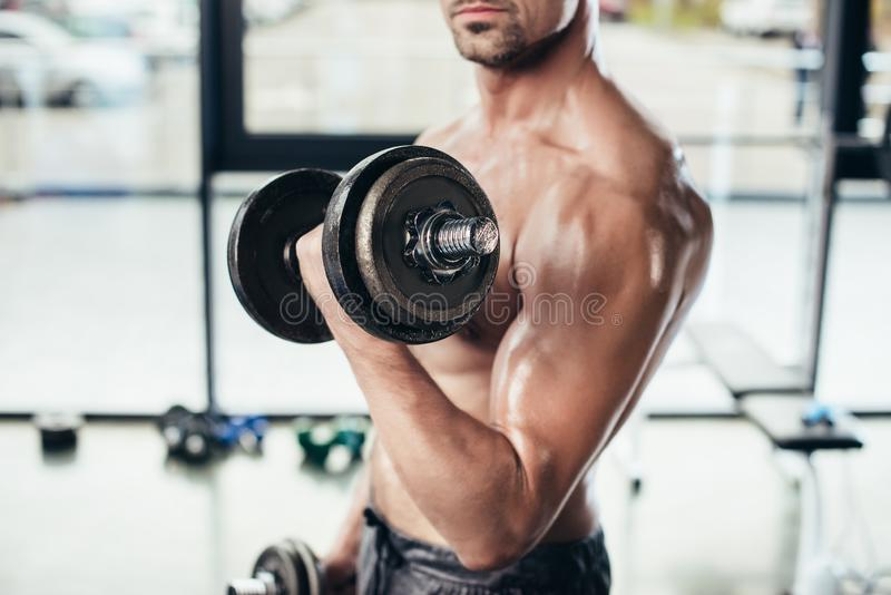 Cropped image of shirtless sweaty sportsman training with dumbbells. In gym royalty free stock photos