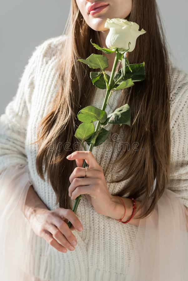 Cropped image of woman in stylish winter outfit holding white rose. On white stock photography