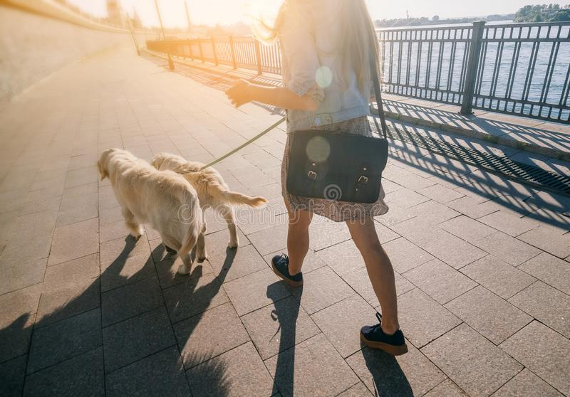 Portrait of a girl with two golden retriever dogs in a park with sunset royalty free stock photography