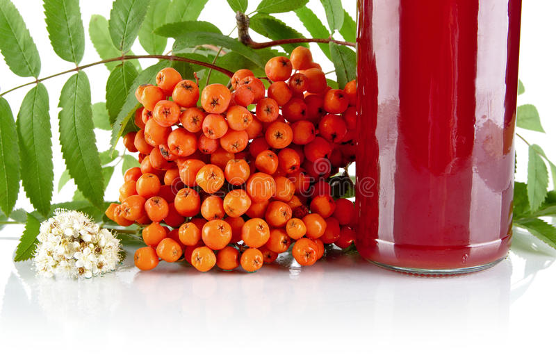 Cropped orange rowanberry with jar of juice on white. Studio shot of cropped orange rowanberry with blossom, green leaves and jar of juice of rowanberry on white stock image