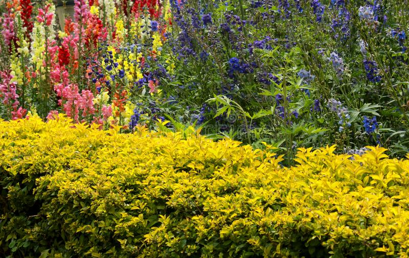 Cropped plants with decorative garden flowerS in the bryant park, kodaikanal. royalty free stock image