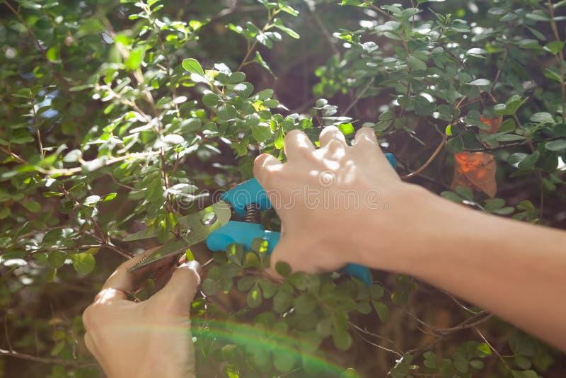 Cropped ręki kobiet tnące rośliny z przycinać strzyżenia obraz royalty free