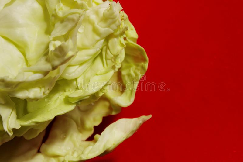 Cropped shot of cabbage on red background. Healthy food,  colorful nature background concept royalty free stock image