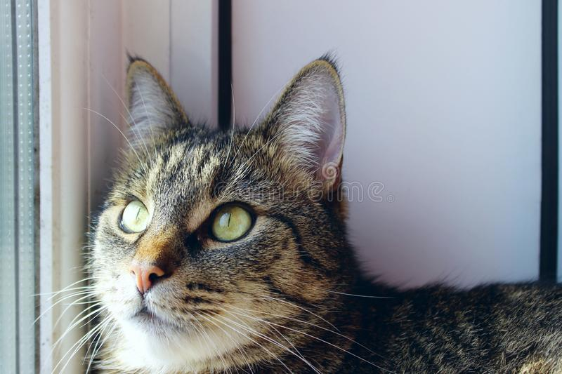 Portrait Of A Cat, Close Up. Pets, Animals Day, Animals Concept. Tabby Cat. Cropped Shot Of A Cat Looking To The Side. Portrait Of A Cat, Close Up. Pets stock photo