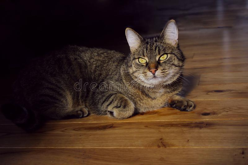 Portrait Of A Cat, Close Up. Pets, Animals Day, Animals Concept. Tabby Cat. Cropped Shot Of A Cat Looking To The Side. Portrait Of A Cat, Close Up. Pets royalty free stock image
