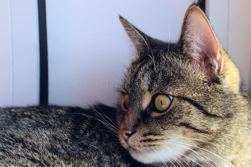 Portrait Of A Cat, Close Up. Pets, Animals Day, Animals Concept. Tabby Cat. Cropped Shot Of A Cat Looking To The Side. Portrait Of A Cat, Close Up. Pets royalty free stock photography