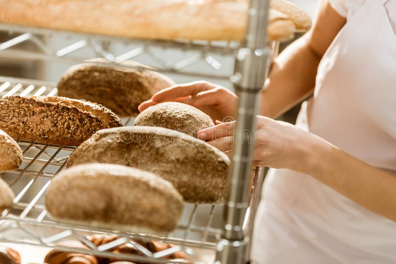 Cropped shot of female baker doing examination of freshly baked bread loaves. On baking manufacture royalty free stock image