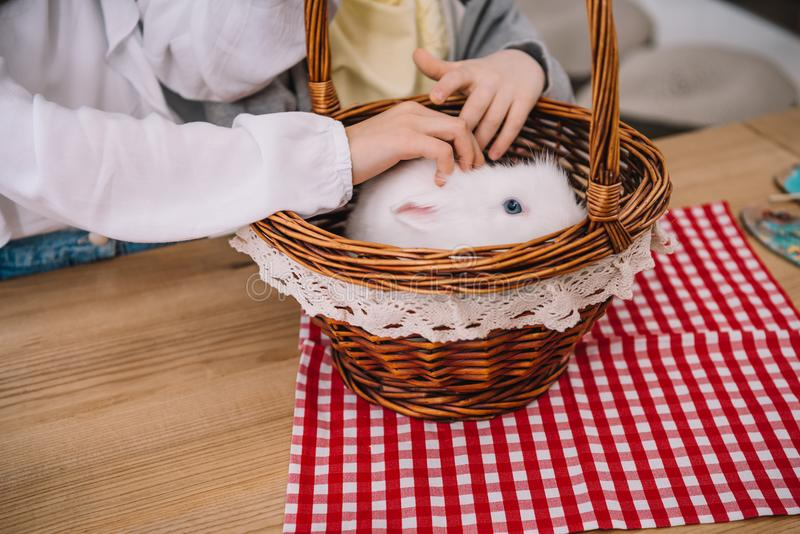 cropped shot of kids playing with rabbit royalty free stock images