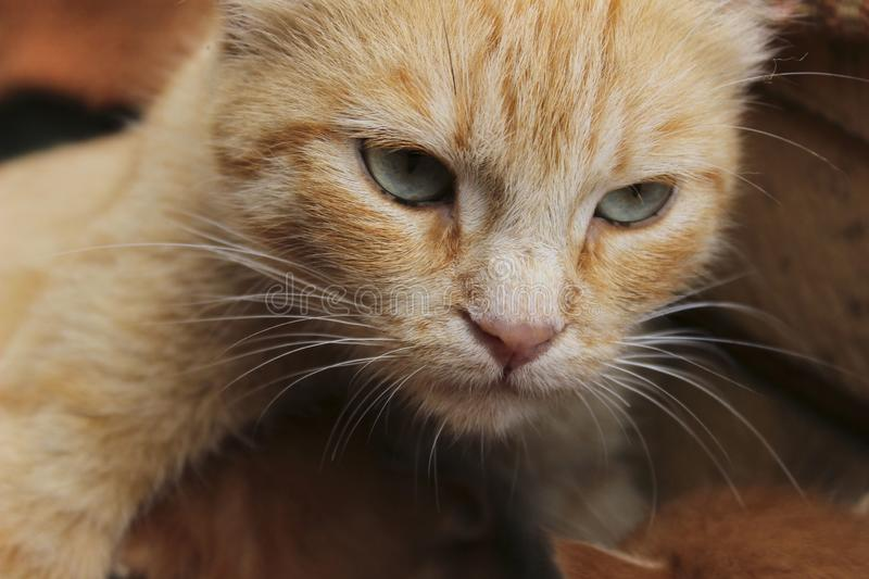 Cropped shot of red tabby cat. Animals, pets concept. Red stray cat, close up stock image
