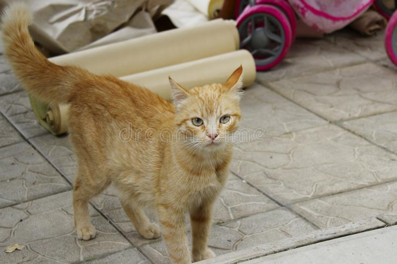 Cropped shot of red tabby cat. Animals, pets concept. Red stray cat, close up royalty free stock photo