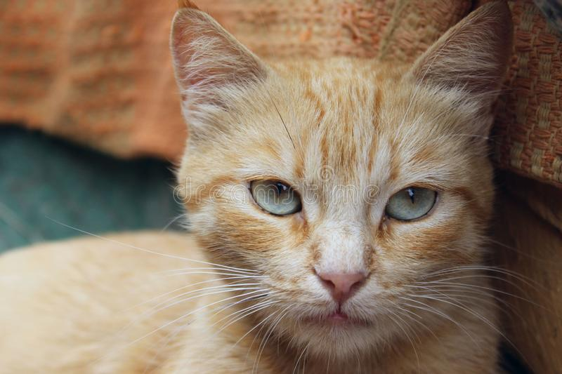 Cropped shot of red tabby cat. Animals, pets concept. Red stray cat, close up stock photo
