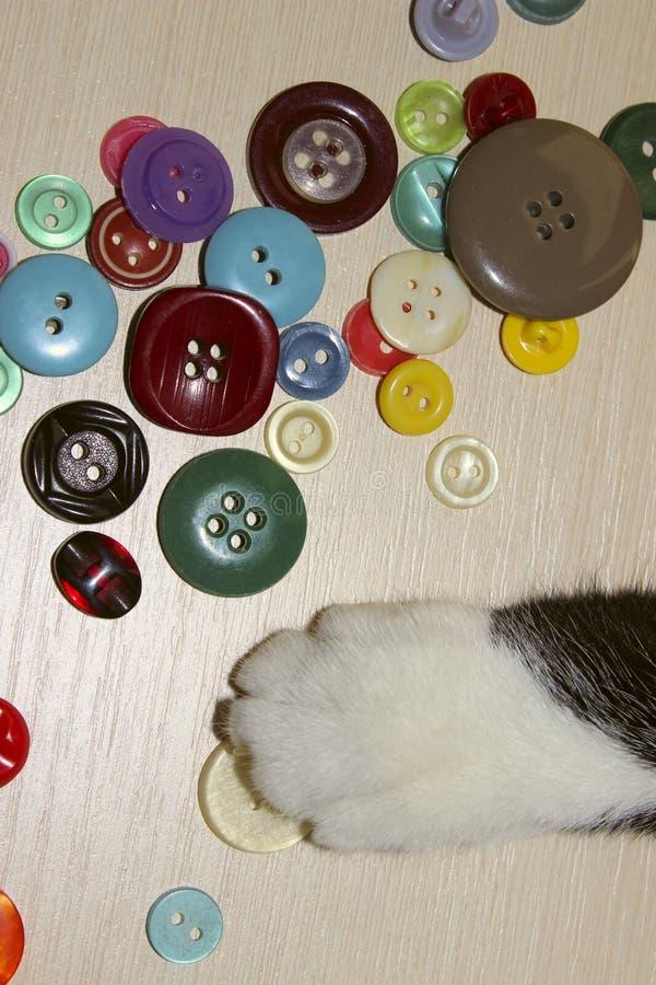 Cropped strzał kot Bawić się Kolorowych guziki kota ` s łapa obrazy stock