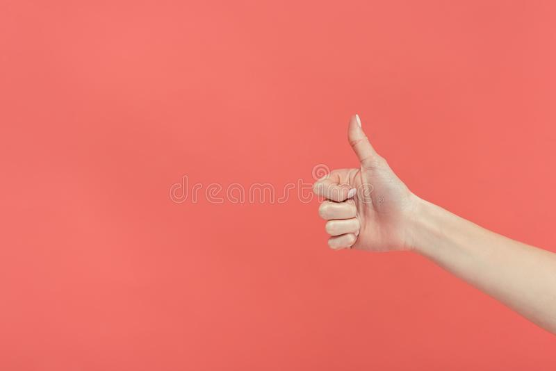 cropped view of female hand showing thumb up, royalty free stock image