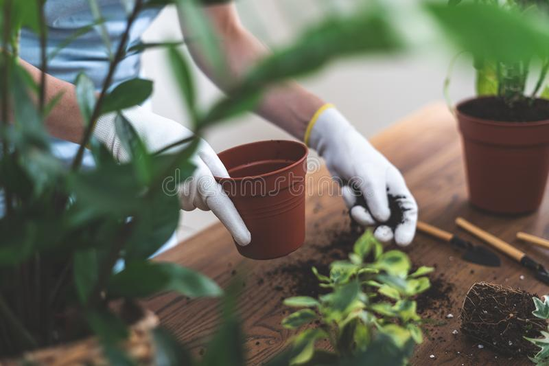 Gardener holding brown pot and ground in hands, standing near wooden table royalty free stock photography
