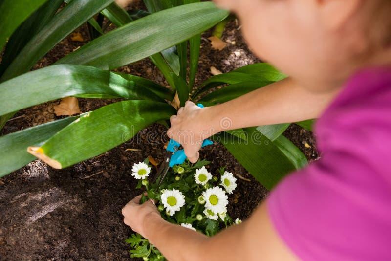 Cropped wizerunek ciie kwiatonośnej rośliny z przycinać strzyżenia kobieta zdjęcie stock