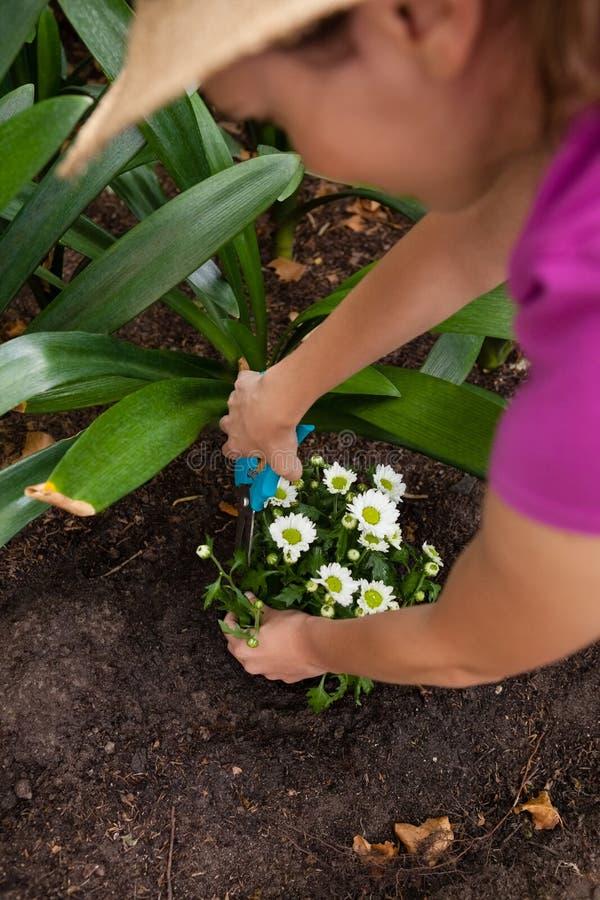 Cropped wizerunek przycina strzyżenia na kwiatonośnej roślinie kobieta używa obraz royalty free