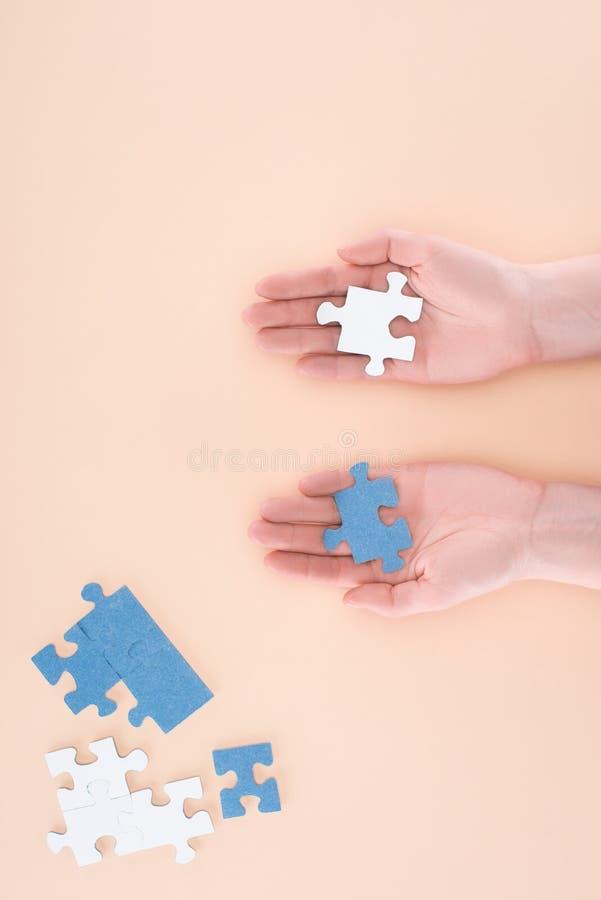 cropped wizerunek trzyma błękit i biel bizneswoman intryguje w rękach obrazy stock
