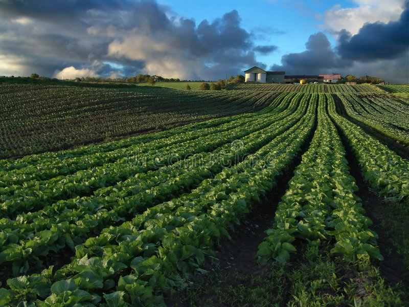 Download Crops stock photo. Image of buildings, soil, farms, rain - 8774