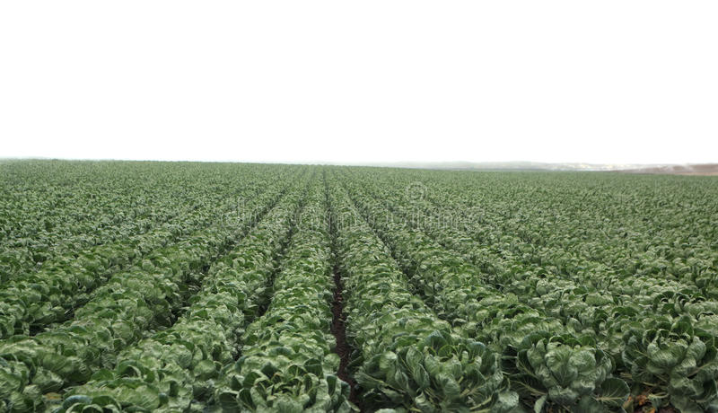 Download Crops Stock Images - Image: 20949204