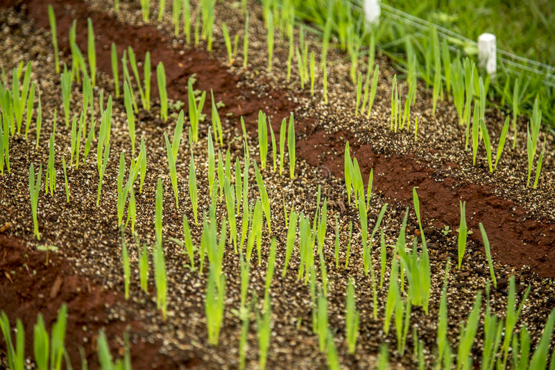 crops immagine stock libera da diritti