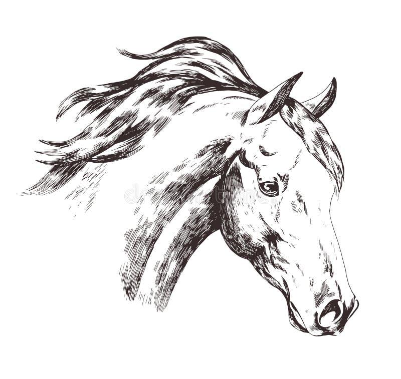 Croquis main lev e de t te de cheval d 39 isolement sur le - Dessin de cheval magnifique ...