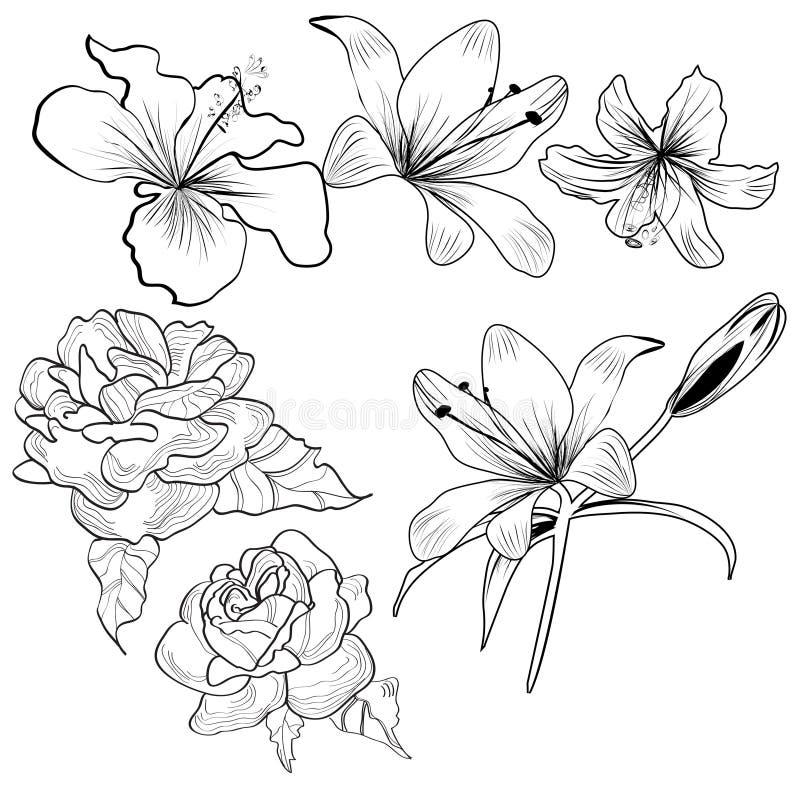 Croquis avec des fleurs illustration libre de droits