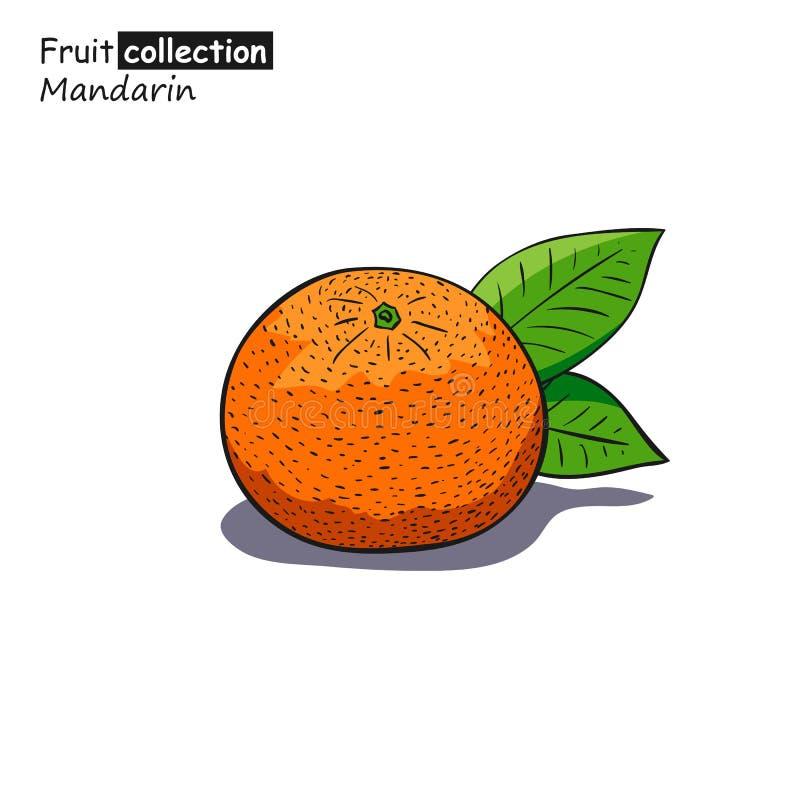 Croquis coloré de mandarine illustration de vecteur