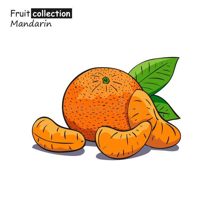 Croquis coloré de mandarine illustration libre de droits