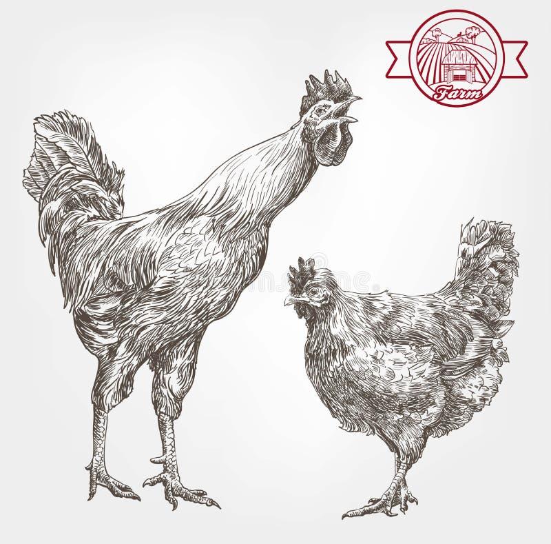 Croquis d'élevage de volaille illustration libre de droits