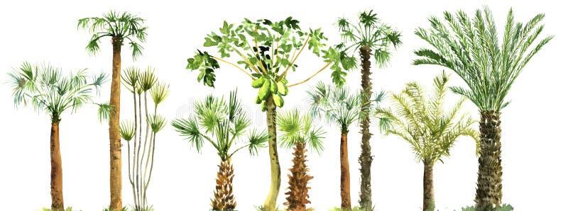 Croquis d'aquarelle des palmiers illustration libre de droits
