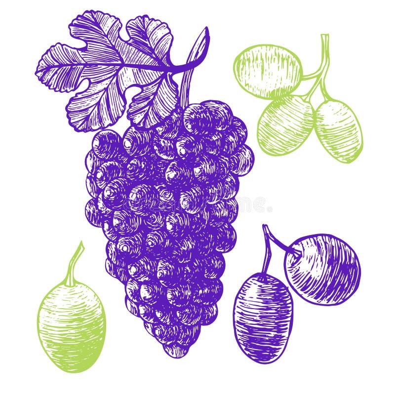 Croquis d'aspiration de main de raisin Vecteur illustration libre de droits