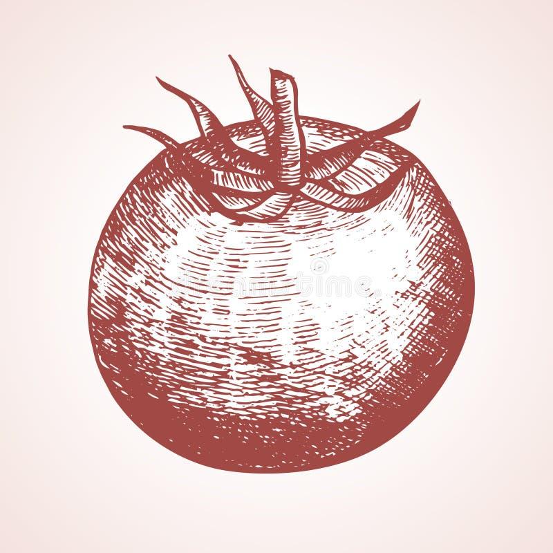 Croquis d'aspiration de main de tomate Vecteur illustration de vecteur