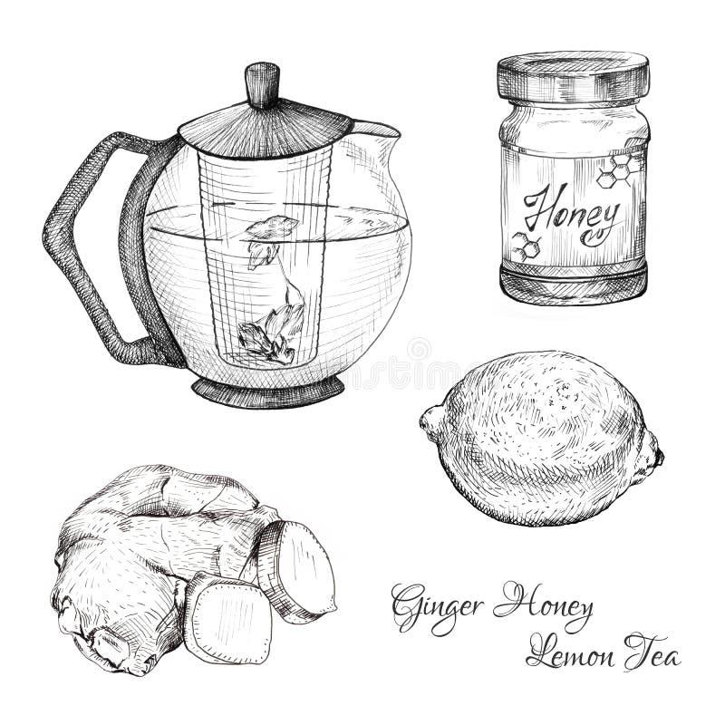 Croquis d'encre de thé de citron de miel de gingembre réglés illustration libre de droits