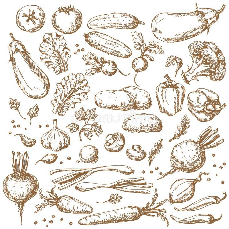 Croquis d'ensemble de légumes illustration stock