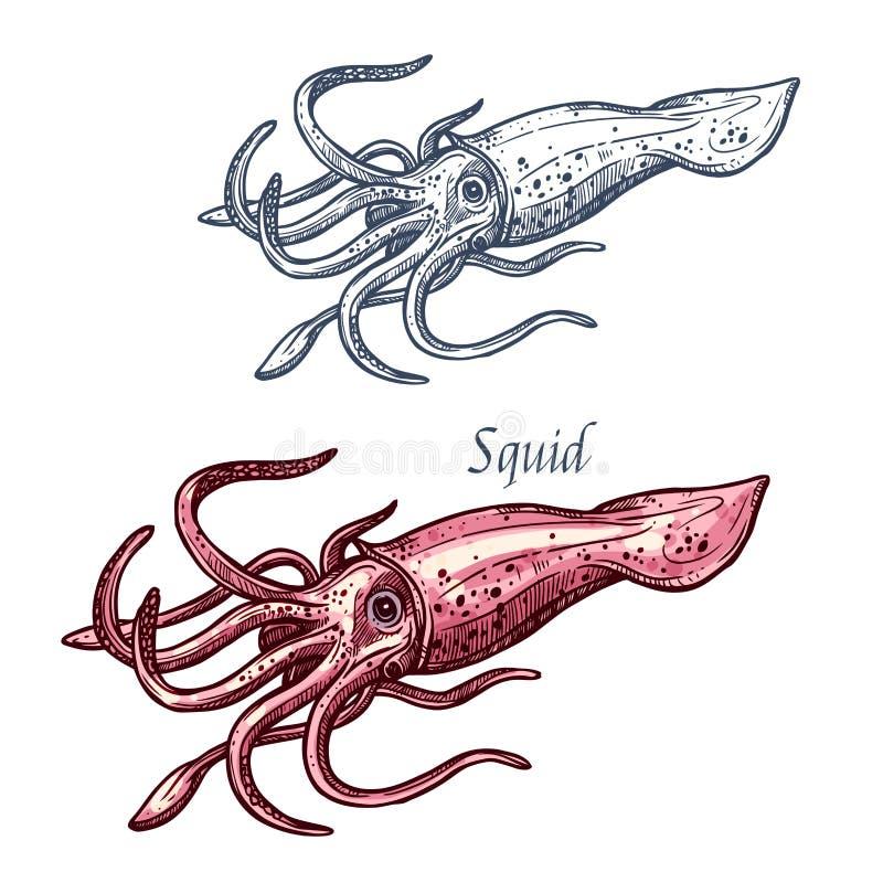 Croquis d'isolement d'animal de mer de fruits de mer de calmar illustration libre de droits