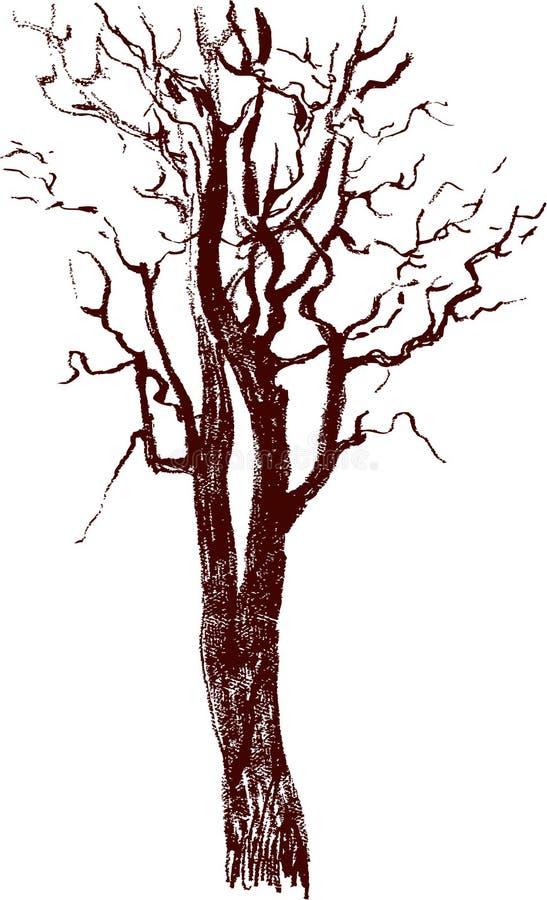 Croquis d 39 un arbre illustration de vecteur illustration - Croquis arbre ...
