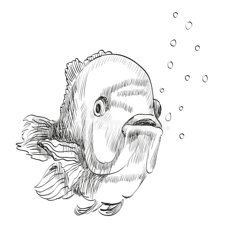 Croquis d 39 un poisson illustration de vecteur illustration - Croquis poisson ...