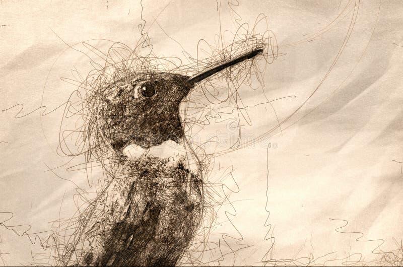 Croquis d'un profil Rubis-Throated de colibri illustration de vecteur