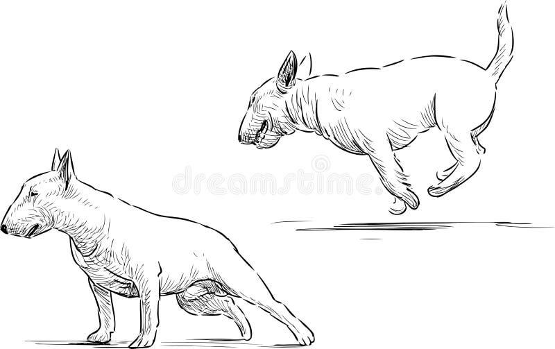 Croquis de bull-terrier illustration libre de droits