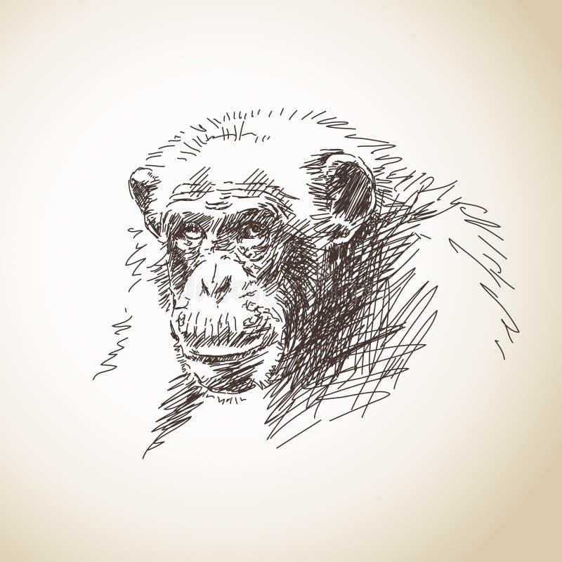 Croquis de chimpanzé illustration libre de droits