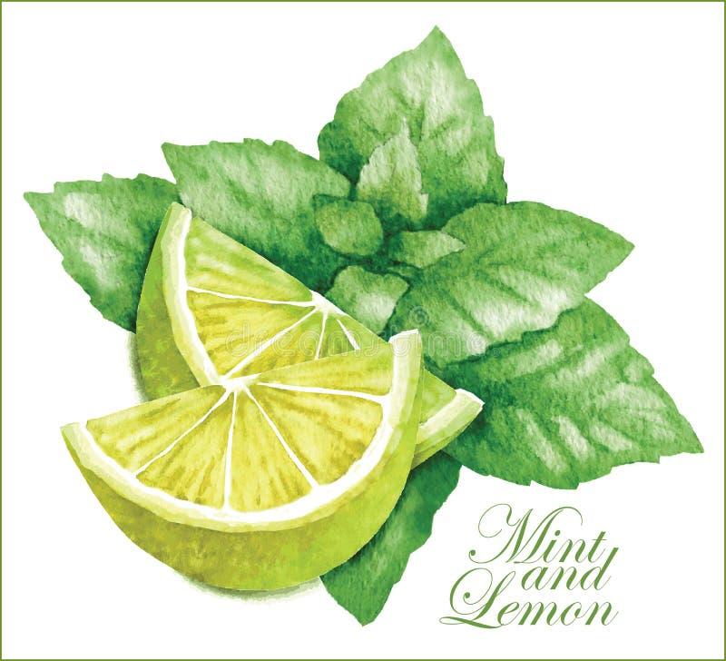 Croquis de citron et de menthe illustration stock
