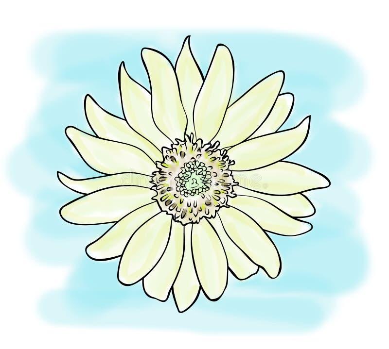 Croquis de couleur de fleur jaune de tournesol sur le fond bleu, dessin peint à la main d'ensemble illustration de vecteur