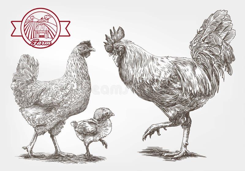 Croquis de couvée-poule illustration libre de droits