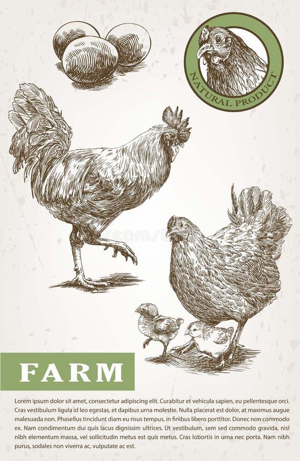 Croquis de couvée-poule et de coq illustration libre de droits