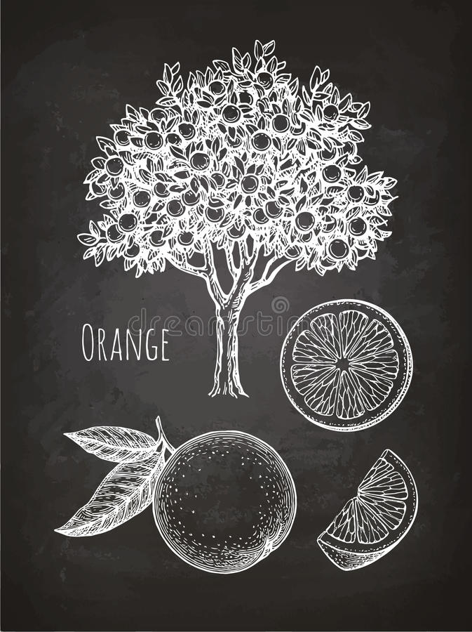 Croquis de craie d'orange illustration de vecteur