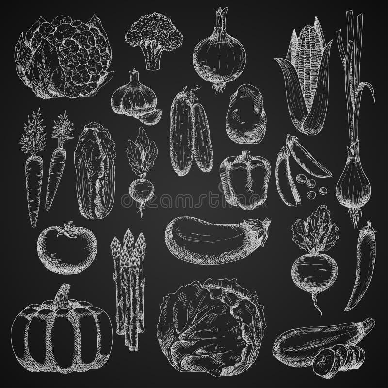 Croquis de craie des légumes de ferme illustration de vecteur